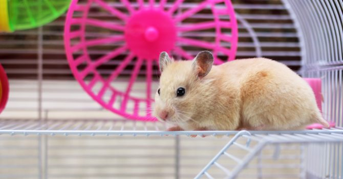 What Do Leaders And Gerbils Have In Common?